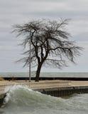 Ikonowy Samotny drzewo Zdjęcie Stock
