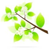 ikony gałęziasty zielony drzewo ilustracja wektor