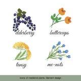 Ikony lecznicze rośliny 4 ilustracji
