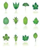 ikony liść drzewo Obrazy Royalty Free