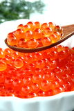 Salmon caviar, Ikura Royalty Free Stock Photos