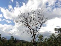 Il était une fois il y avait un arbre Images libres de droits