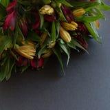 Il Alstroemeria fiorisce arancio luminoso multicolore e rosso delicati Fotografie Stock Libere da Diritti