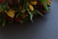 Il Alstroemeria fiorisce arancio luminoso multicolore e rosso delicati Immagini Stock Libere da Diritti