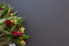 Il Alstroemeria fiorisce arancio luminoso multicolore e rosso delicati Fotografie Stock