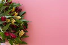 Il Alstroemeria fiorisce arancio luminoso multicolore e rosso delicati Fotografia Stock