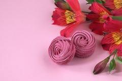 Il Alstroemeria fiorisce il fondo di carta rosa-rosso dello zefiro bianco Immagini Stock Libere da Diritti