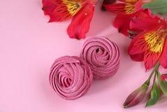 Il Alstroemeria fiorisce il fondo di carta rosa-rosso dello zefiro bianco Fotografia Stock Libera da Diritti