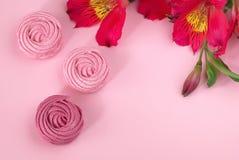 Il Alstroemeria fiorisce il fondo di carta rosa-rosso dello zefiro bianco Fotografia Stock
