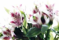 il alstroemeria fiorisce la bellezza del primo piano della luce della finestra del mazzo Fotografia Stock