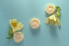 Il Alstroemeria fiorisce lo zefiro bianco sul fondo della carta blu Fotografia Stock