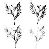 Il Arborvitae lascia l'impressione illustrazione vettoriale