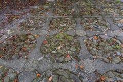 Il atumn Colourful lascia sull'i pavemen di pietra immagine stock libera da diritti