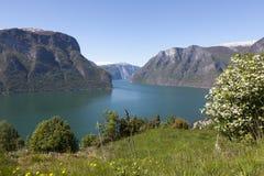 Il Auerlandsfjord Fotografia Stock Libera da Diritti