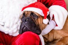Il Babbo Natale con il cane Immagini Stock Libere da Diritti