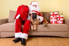 Il Babbo Natale con il cane Immagine Stock