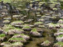 Il baccello alpino con erba si copre di zolle la riflessione nell'acqua Immagine Stock