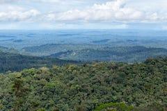 Il bacino di Amazon dell'Ecuador fotografia stock