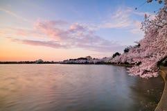 Il bacino di marea in Washington DC Immagini Stock Libere da Diritti