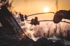 Il bacon su una torrefazione del bastone su un falò Fotografia Stock