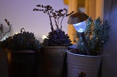 Il balcone domestico, il rosmarino, crassulacee del fiore, ha acceso la lampada solare, fiorisce le siluette immagine stock