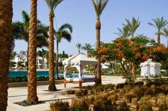 Il baldacchino bianco del baldacchino sulle colonne sopra il letto e le palme su un mare caldo tropicale ricorrono, riposano fotografia stock