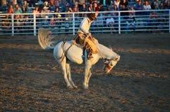 Il ballerino del cavallo Fotografie Stock