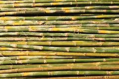 Il bambù. Fotografia Stock
