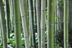 il bambù Immagine Stock Libera da Diritti