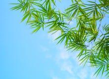 Il bambù lascia il cielo blu Fotografia Stock Libera da Diritti