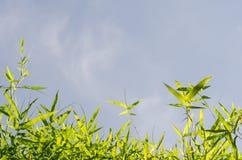 Il bambù lascia il fondo Fotografia Stock Libera da Diritti