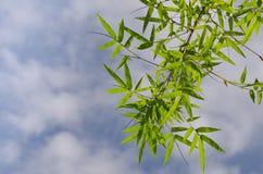 Il bambù lascia il fondo Immagine Stock