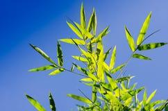 Il bambù lascia il fondo Immagine Stock Libera da Diritti