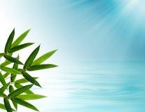 Il bambù lascia la priorità bassa Fotografia Stock Libera da Diritti