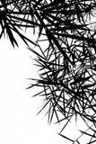 Il bambù lascia la priorità bassa della siluetta Fotografie Stock Libere da Diritti