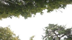 Il bambù sempreverde pianta la vista dal basso, resto in parco, piante tropicali di clima video d archivio