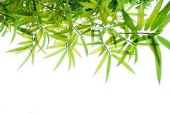 Il bambù verde lascia il blocco per grafici Fotografie Stock Libere da Diritti