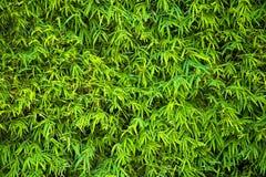 Il bambù verde lascia la priorità bassa Immagini Stock Libere da Diritti