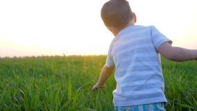 Il bambino cammina nel campo dell'estate e tocca l'erba fresca nella mattina al sole archivi video