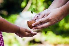 Il bambino con i genitori passa la tenuta dell'albero giovane nelle coperture dell'uovo insieme Immagini Stock