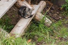 Il bambino del gatto si siede sui punti rustici Immagine Stock Libera da Diritti