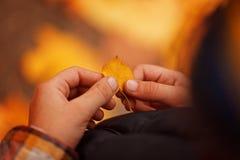 Il bambino del primo piano passa la tenuta della foglia gialla piccola di autunno Priorità bassa di autunno Fotografia Stock