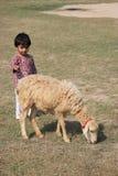 Il bambino e la pecora è nel campo Fotografie Stock