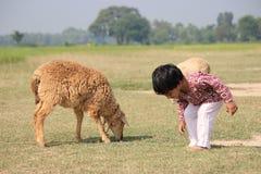 Il bambino e la pecora è nel campo Immagini Stock