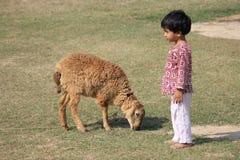 Il bambino e la pecora è nel campo Fotografia Stock