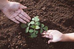 Il bambino ed il genitore passano la piantatura dell'albero giovane su suolo nero insieme Fotografia Stock Libera da Diritti