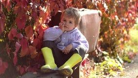 Il bambino felice ride l'aria aperta sul fondo delle foglie di autunno Ragazzo sveglio del bambino divertendosi nel parco di autu video d archivio