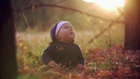 Il bambino getta le foglie gialle nel parco di autunno Il bambino si siede in foglie nel legno Il bambino esamina le foglie paduy stock footage