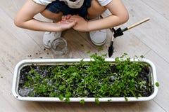 Il bambino ha piegato le sue mani dopo il giardinaggio immagini stock libere da diritti