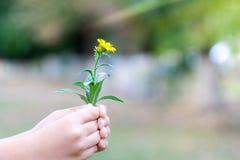 Il bambino ha selezionato un fiore e vuole darlo Un fiore nelle mani dei bambini fotografie stock libere da diritti
